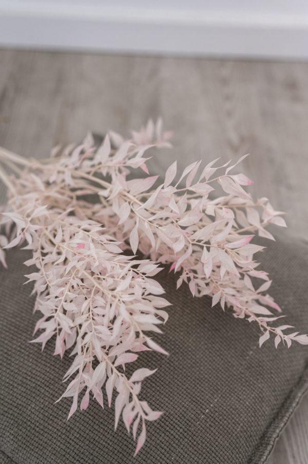zartrosa ruscus