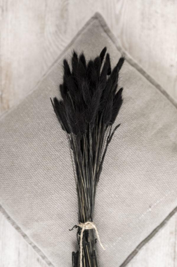 lagurus schwarz