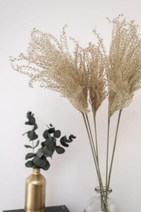 reed gras