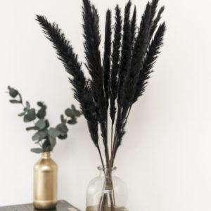 pampasrgas schwarz
