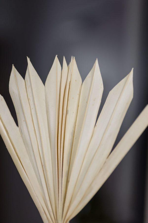 Palmblätter gebleicht
