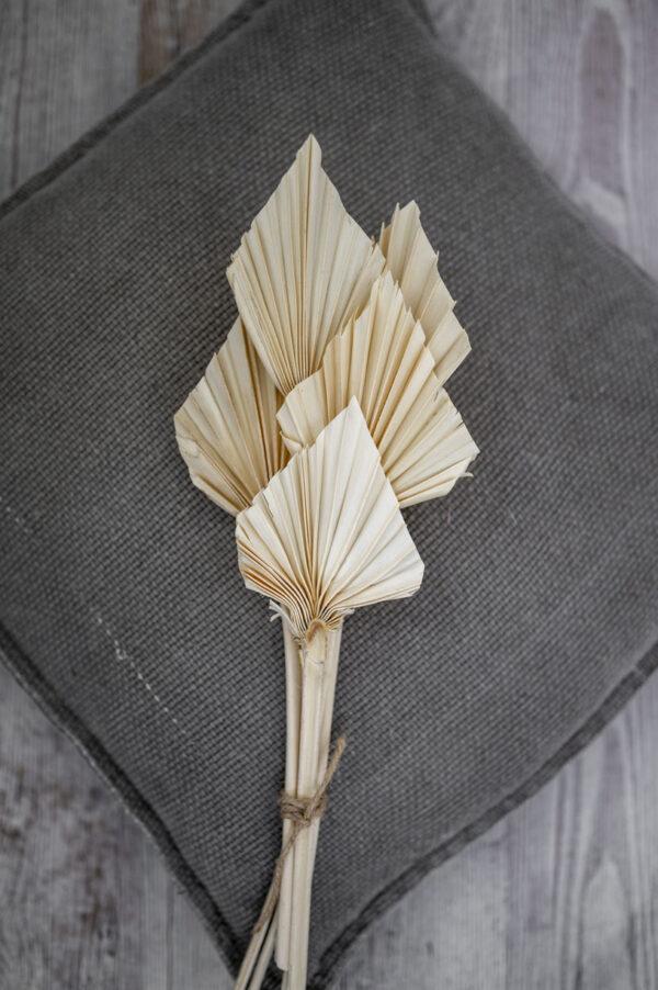 mini palmspeer