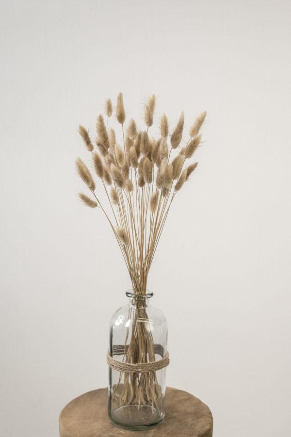 Trockenblumen Lagurus