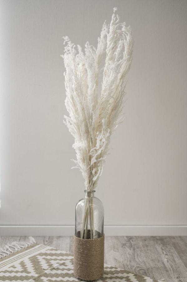 weiße Pampasgräser