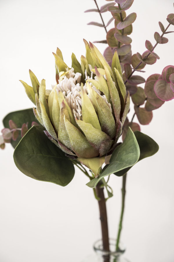 Protea olivegrün