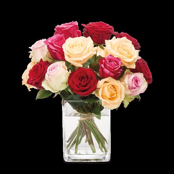 Blumen Heller Trockenblumen