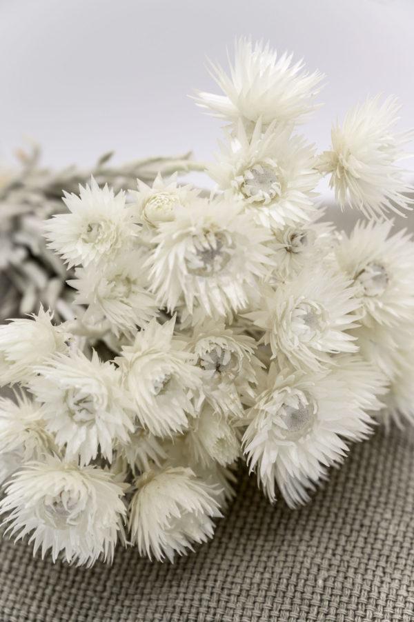gebleichte Trockenblumen