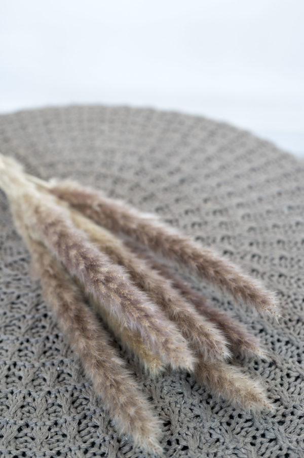 Pamaps Foxtail