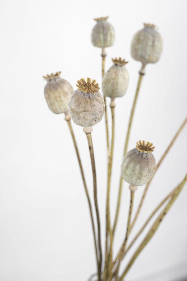 NZ67011 scaled Blumen Heller