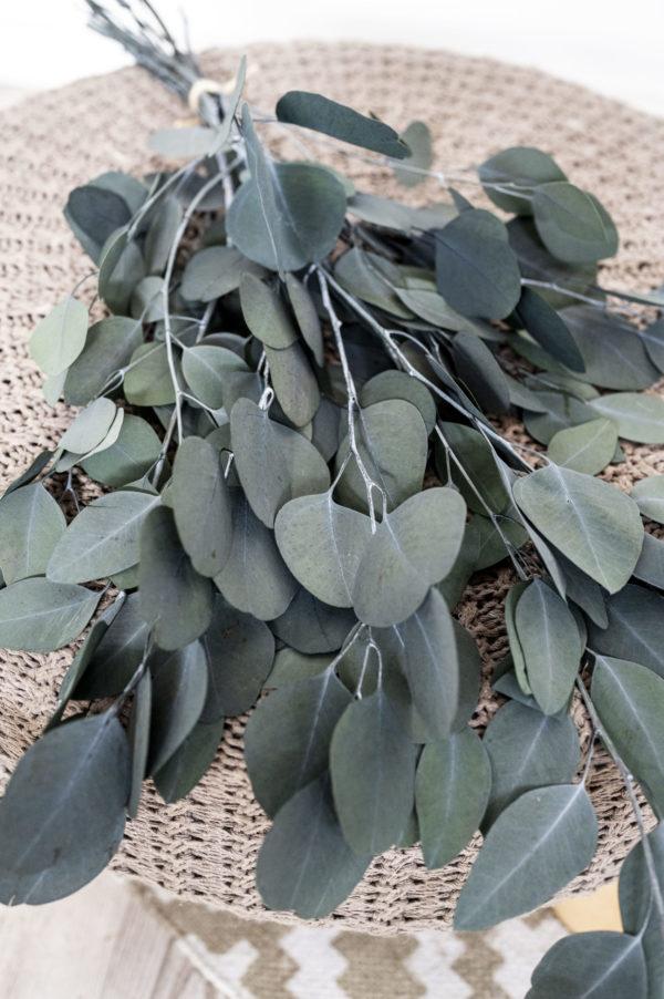 Eukalyptus getrocknet