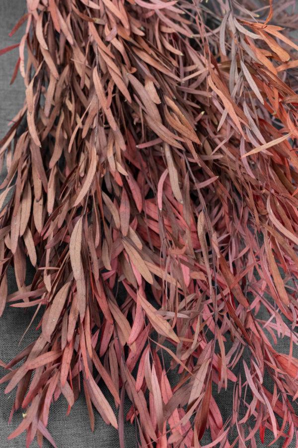Eukalyptus rostbraun