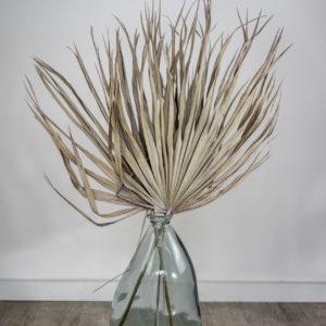 Palmblätter