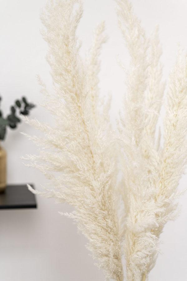 pampasgras weiß