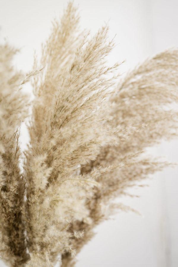 ziergras fluffy
