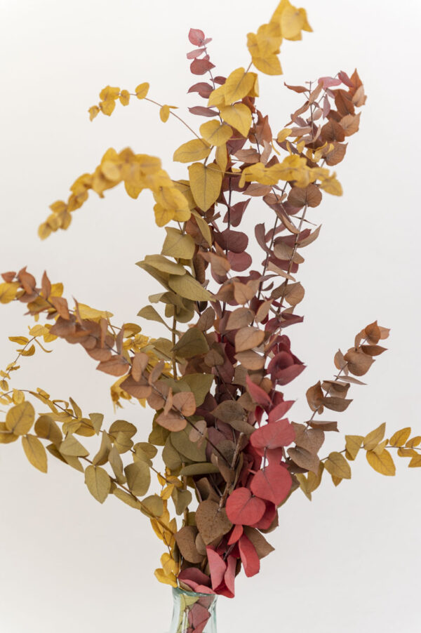 eukalyptus herbstlich