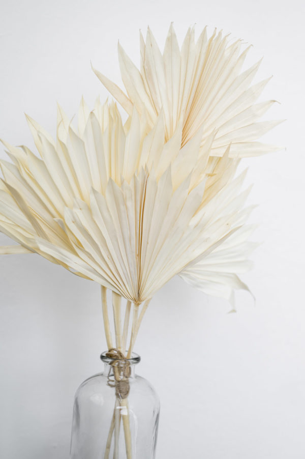 gebleichte Palmblätter