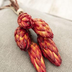 protea rot