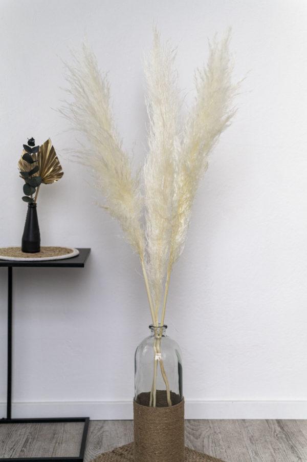 pampasgras fluffig weiß