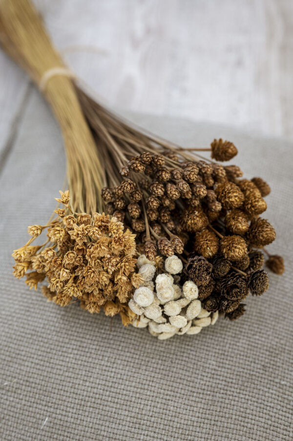 Trockenblumen-Mixbund