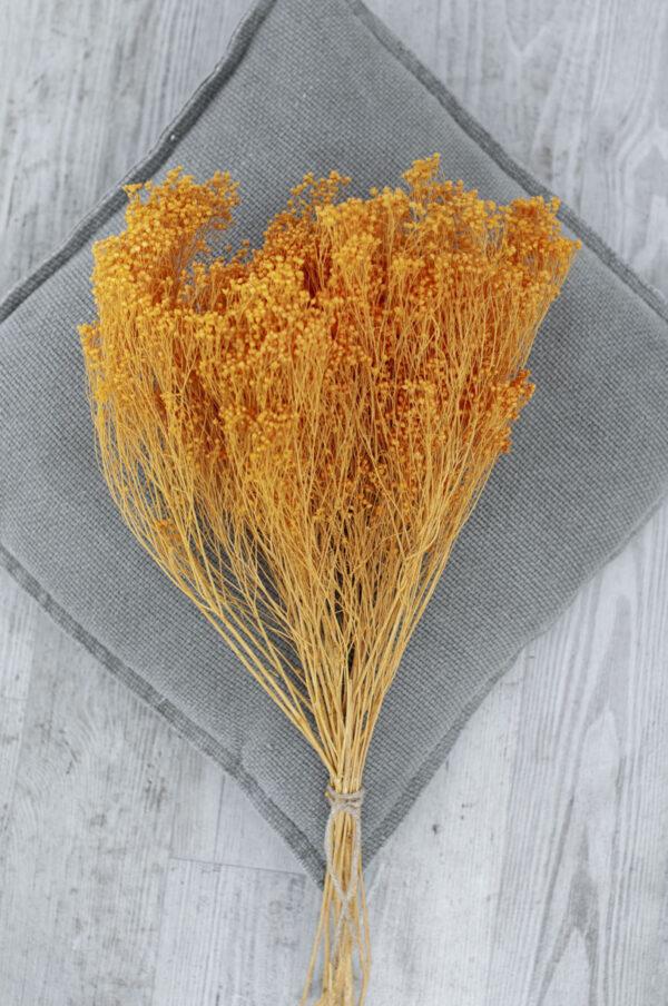 broom-bloom orange