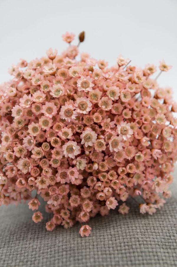 Glixia Trockenblumen | rosa